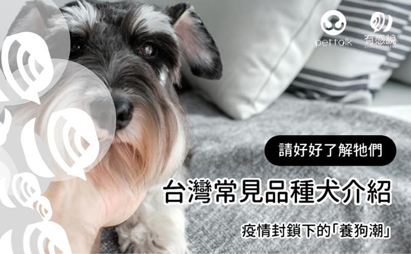 【疫情下養狗潮】請好好了解牠們-台灣常見品種犬介紹|專業獸醫—宋子揚