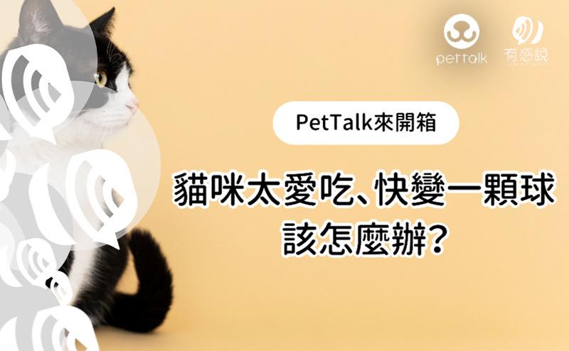 【養貓須知】關於貓咪的體重控管!