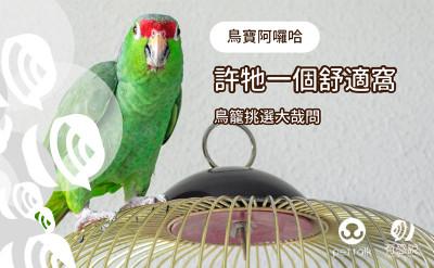 給牠一個舒適窩,鳥籠挑選大哉問|專業獸醫-林依儒