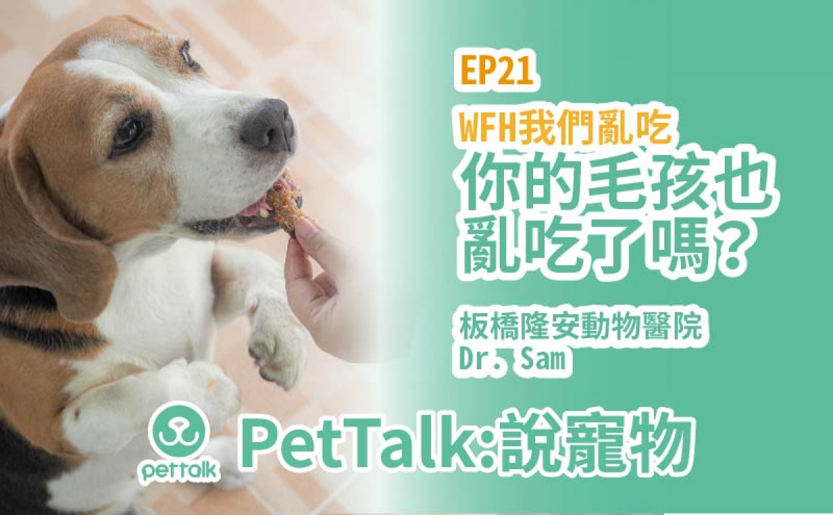 PetTalk說寵物|WFM飼主亂吃,毛孩也跟著隨便吃嗎?【姚勝隆 獸醫師】