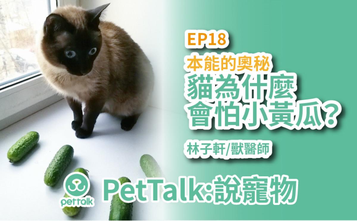 PetTalk說寵物|貓咪超怕小黃瓜?繼續探討貓行為【林子軒 獸醫師】