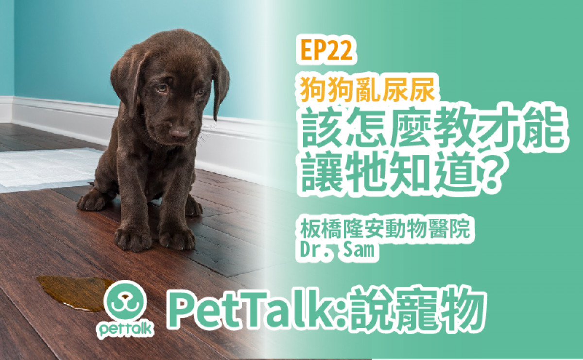 PetTalk說寵物|狗狗亂尿尿怎麼辦?【姚勝隆 獸醫師】