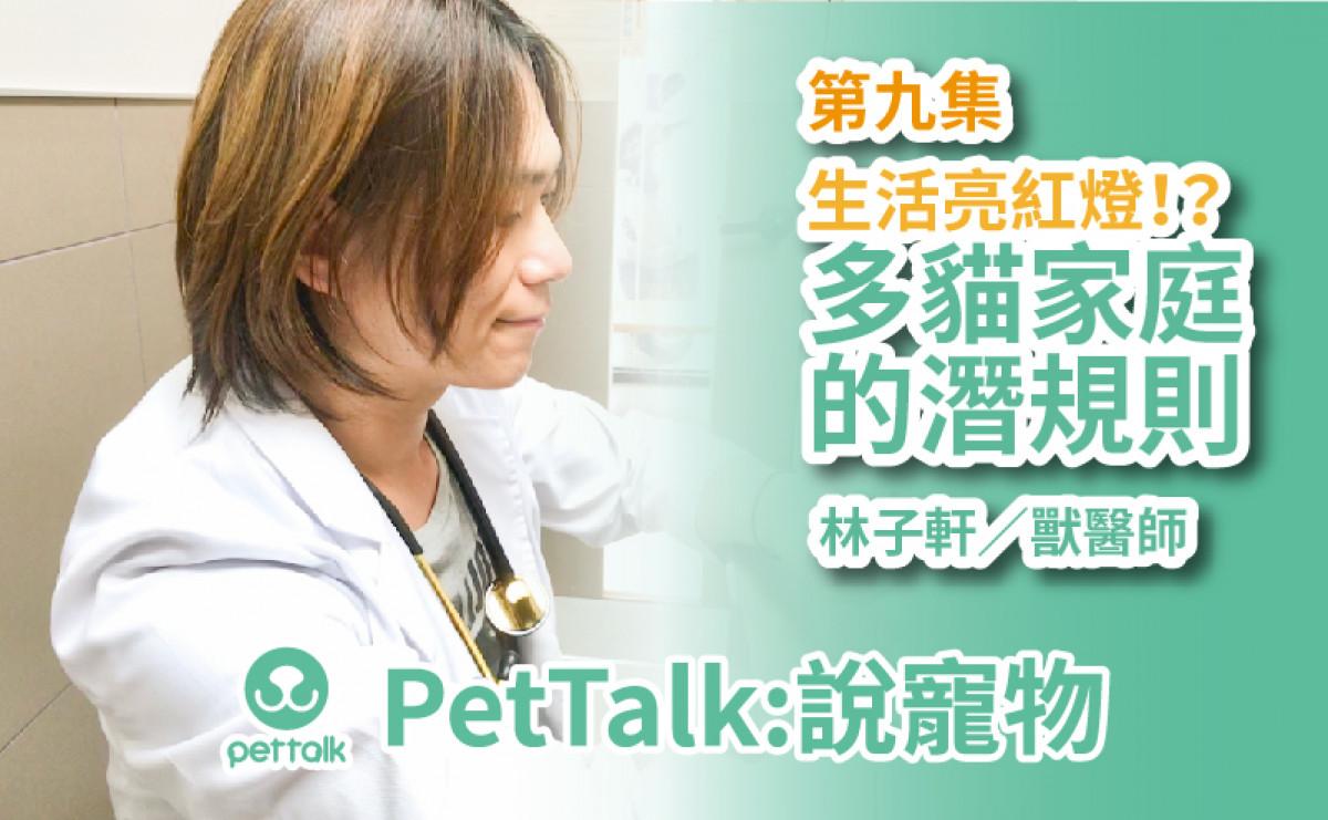 PetTalk說寵物|生活亮紅燈!?多貓家庭的潛規則【林子軒 獸醫師】