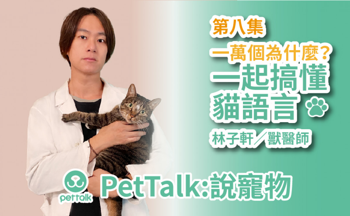 PetTalk說寵物|一萬個為什麼?一起搞懂貓語言 【林子軒 獸醫師】